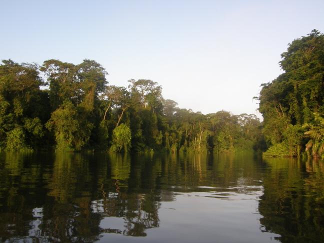 jungle vanaf het water