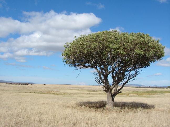 Serengeti plains