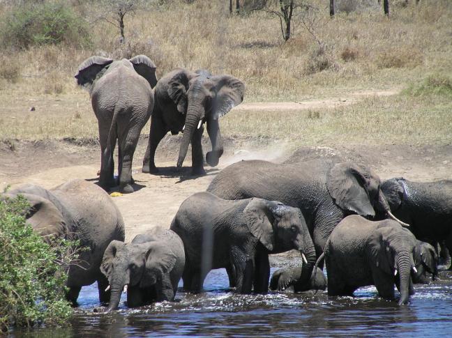 olifanten badderen