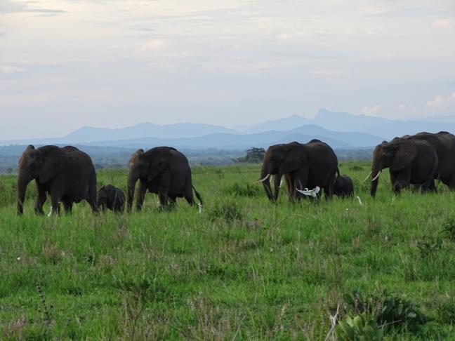 Klein Serengeti