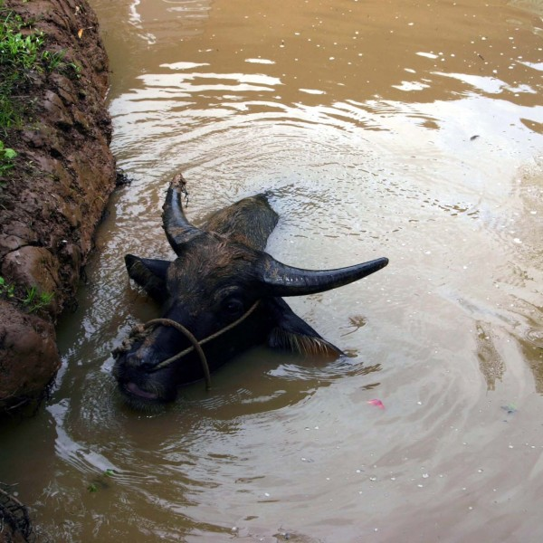 '20754' door Assie