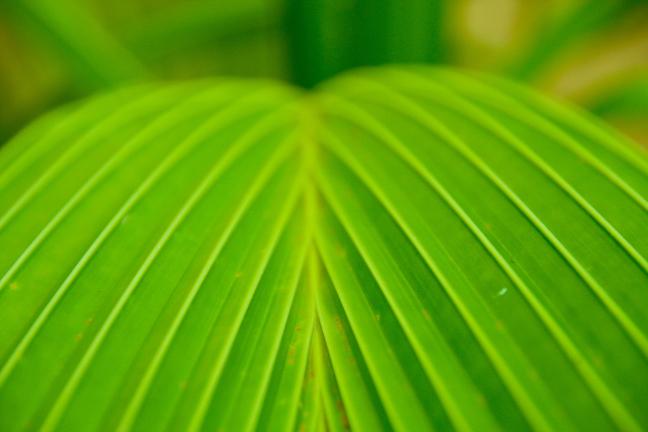 Very green leaf