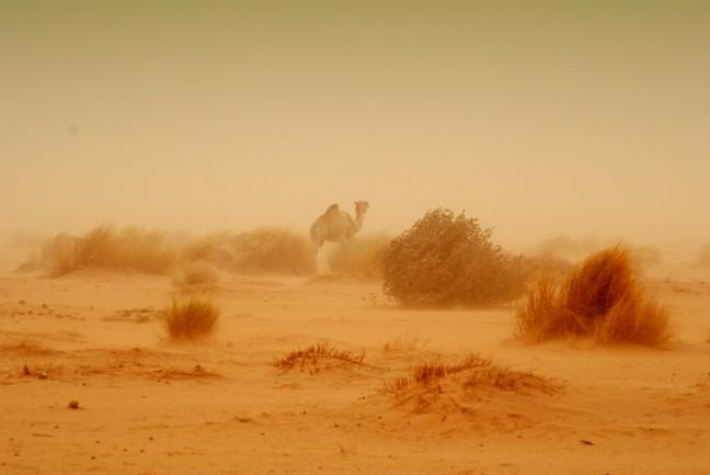 Woestijnstorm