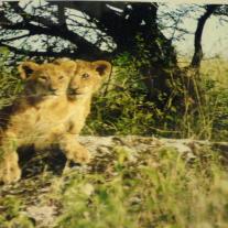 '28637' door Lionmaster2