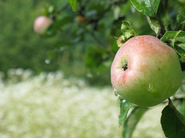 een fris appeltje