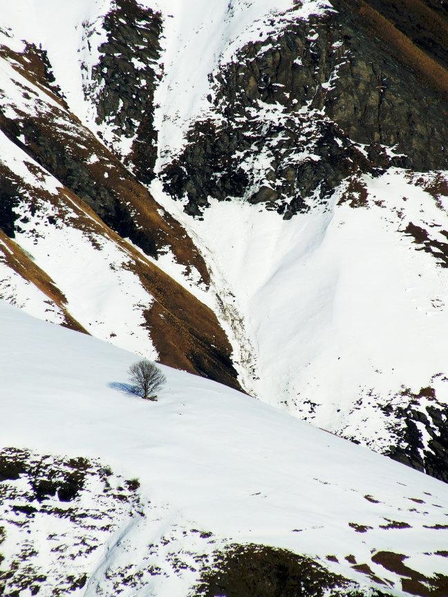 Eenzame boom tussen besneeuwde bergen