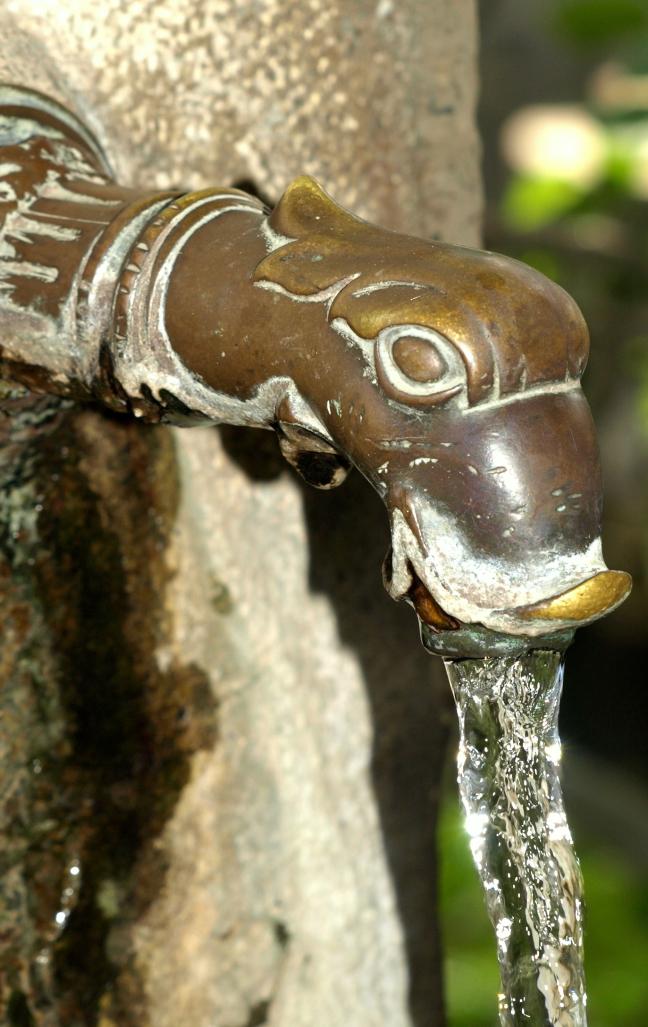 dorstige eend