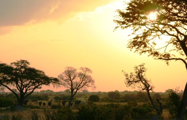 Olifanten in Hwange NP
