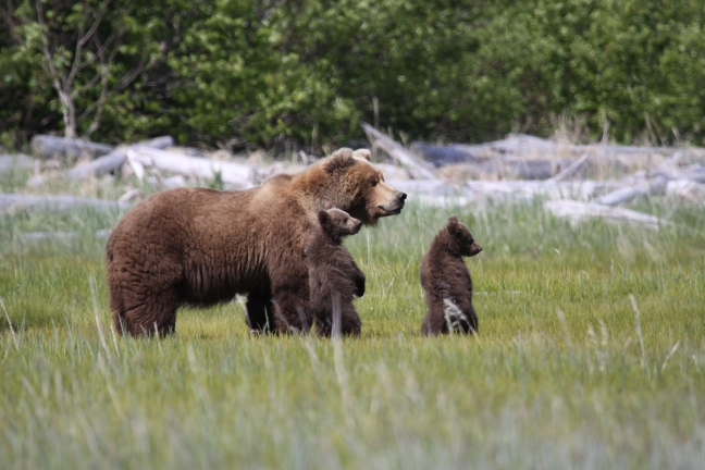 Grizzly met cub's