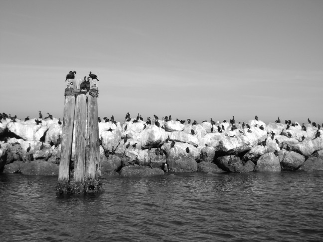 Montery Bay