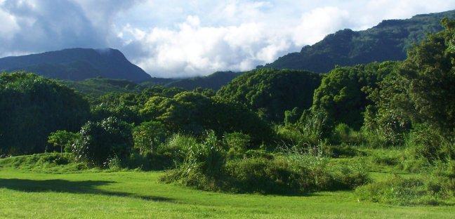 Groen Maui