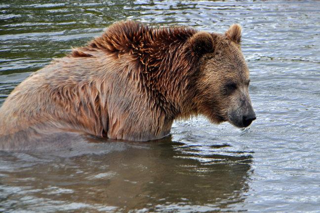 Waardoor is deze beer zo gebiologeerd?!