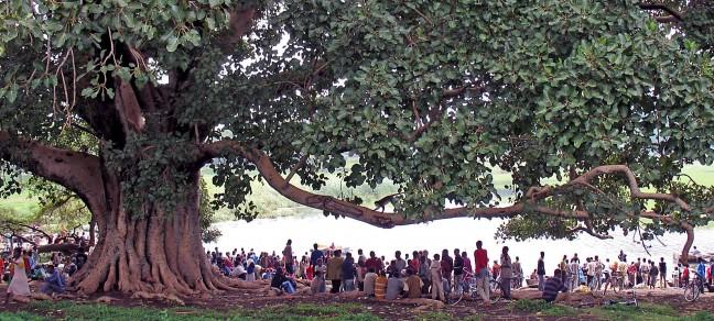 Awassa, apenboom vissershaven
