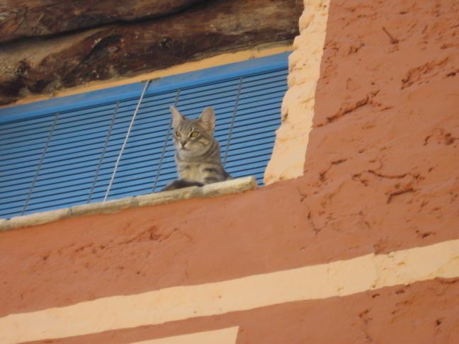Kat in Bocairent