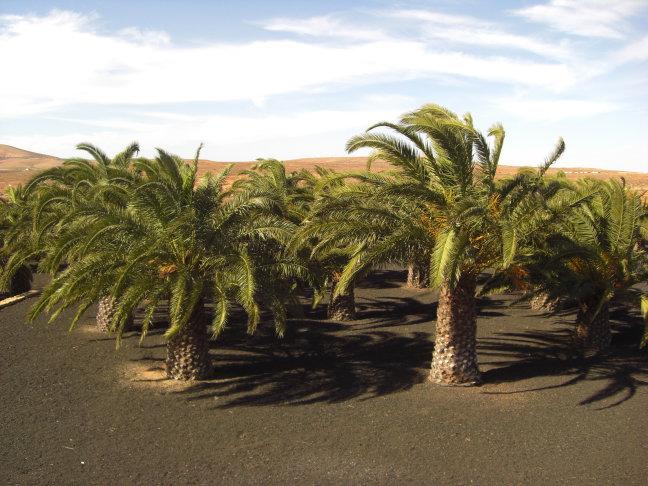 lots off palmtrees