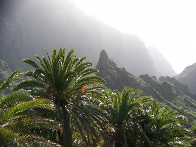 palmbomen, altijd mooi...