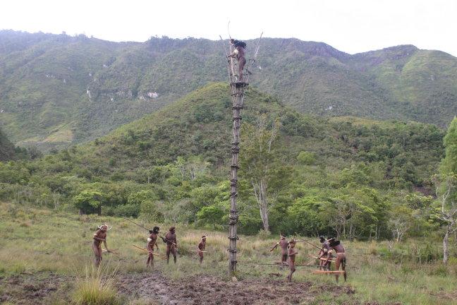papua's op jacht naar mijn varkentje