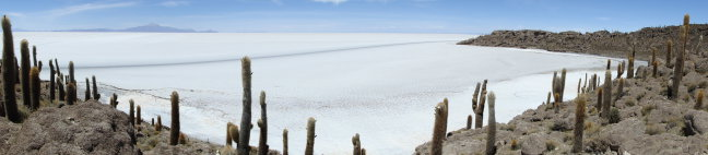 Isla del Pescado: een eiland in het midden van de zoutvlakte bij Uyuni (Bolivia)