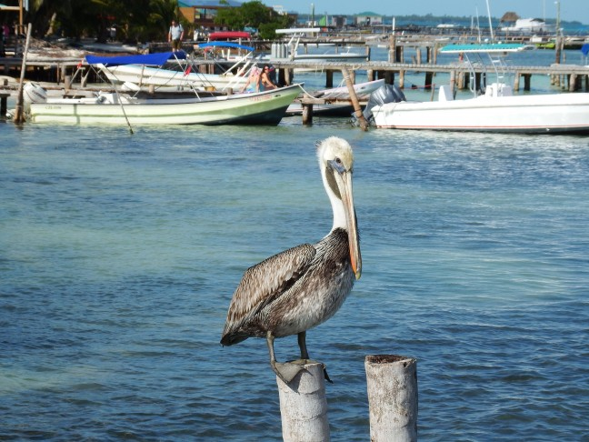 Caye Caulker - Belize - Harry de Pelikaan