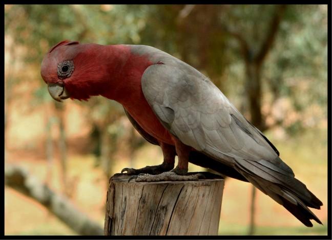 eigenwijze vogel