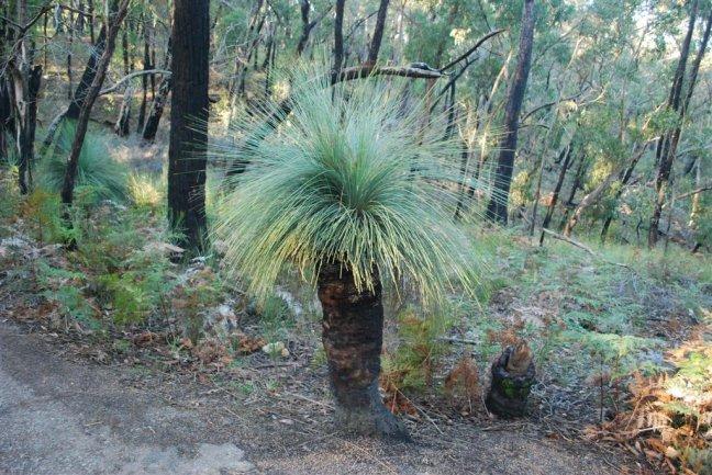 Kangaroo Gras