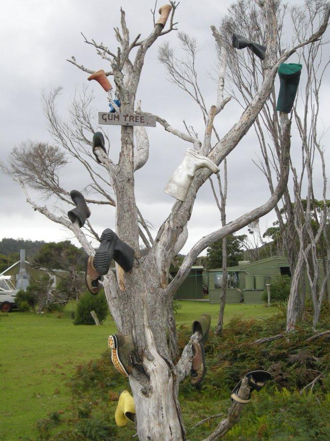 Regenlaarsboom