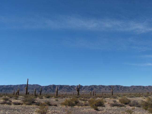 cactuslandschap