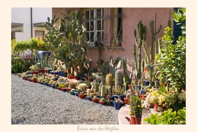 Hoezo ik spaar cactussen?