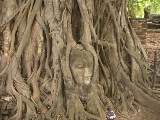 Buddhahoofd in boom