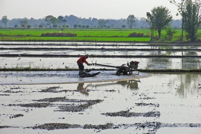nat rijstveld ploegen