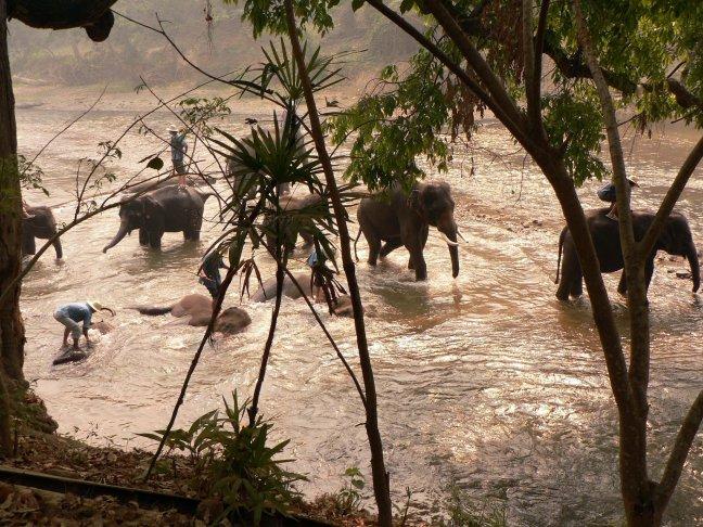 Olifanten worden gewassen.