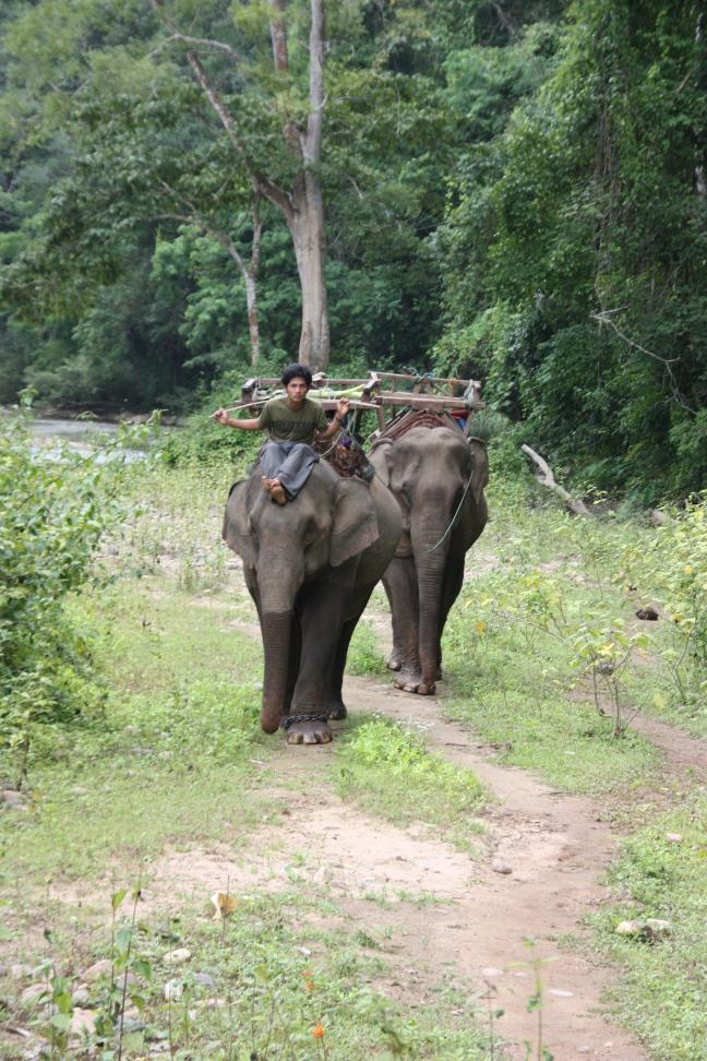 2008: Huay Nam Dang NP: mahout met zijn olifanten.