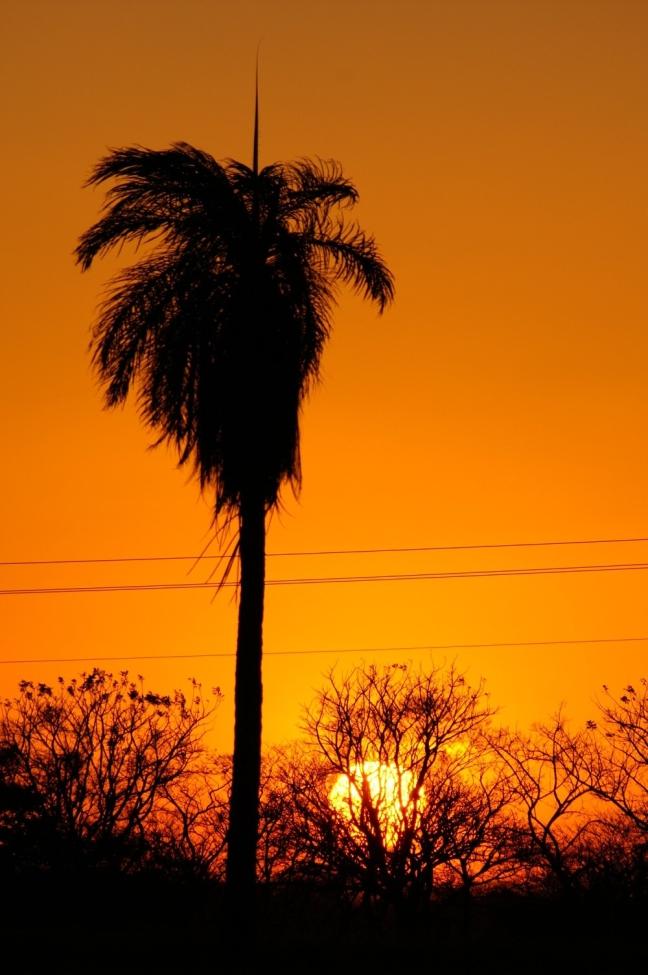 Palm in zonsondergang
