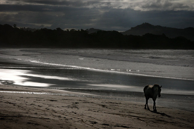 Lonely Horse...
