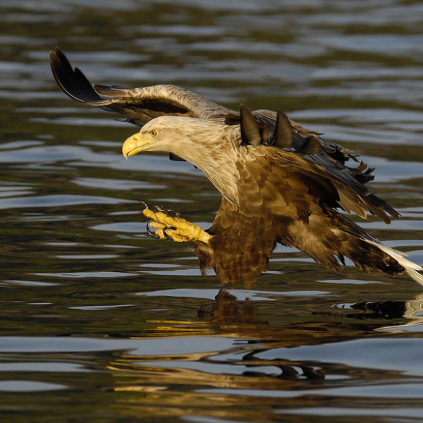 '358974' door Harry-Eggens