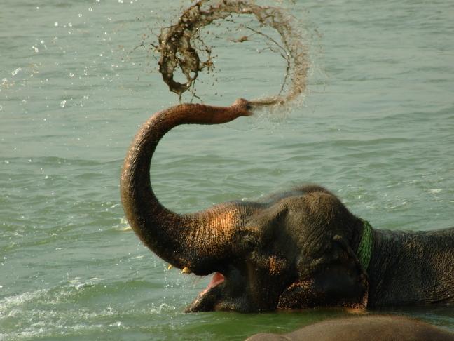 De liefste olifant die er is!!!