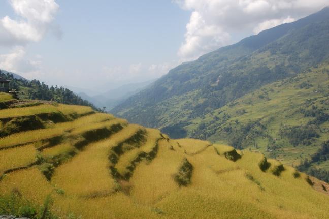 rijstterassen Annapurna-region