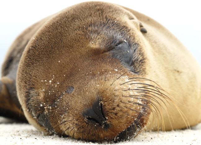 jonge zeehond geniet van het eerste zonnetje
