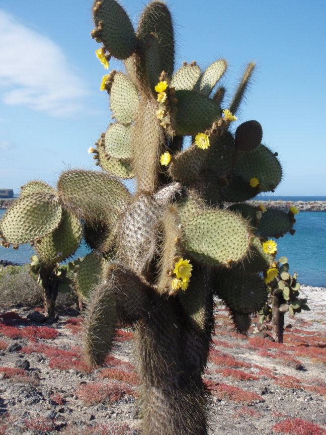 bloeiende cactus