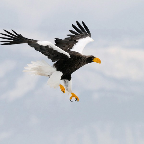 '357988' door Harry-Eggens