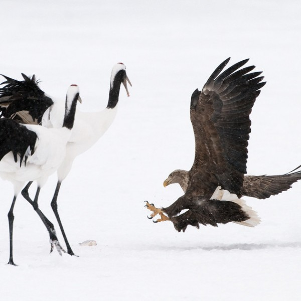'359396' door Harry-Eggens
