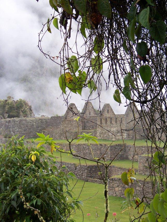 Machu Picchu's bloemenperkje