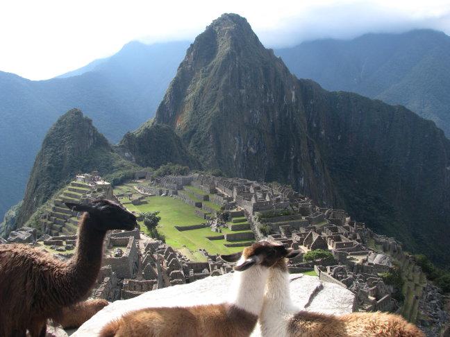 Knuffelende lama's