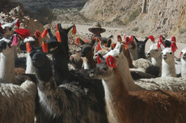 oversteekplaats lama