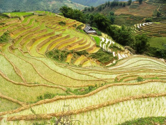 Rijstterrassen in Sapa