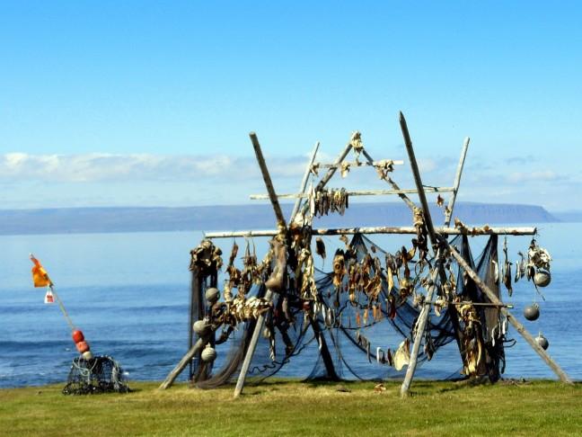 vissen opgehangen aan een hekwerk