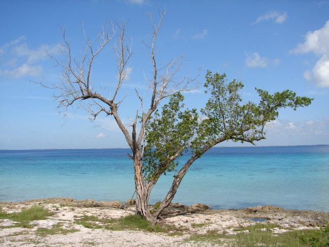 boom aan zee