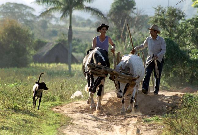 Boeren