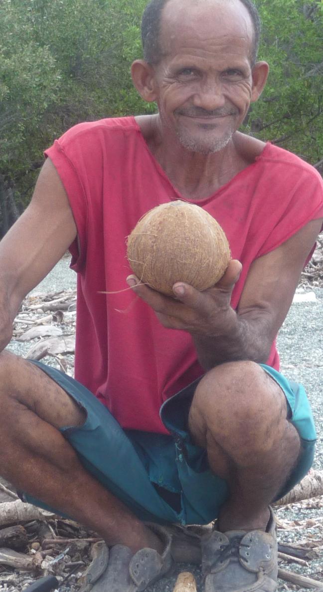 kokosnoten te koop