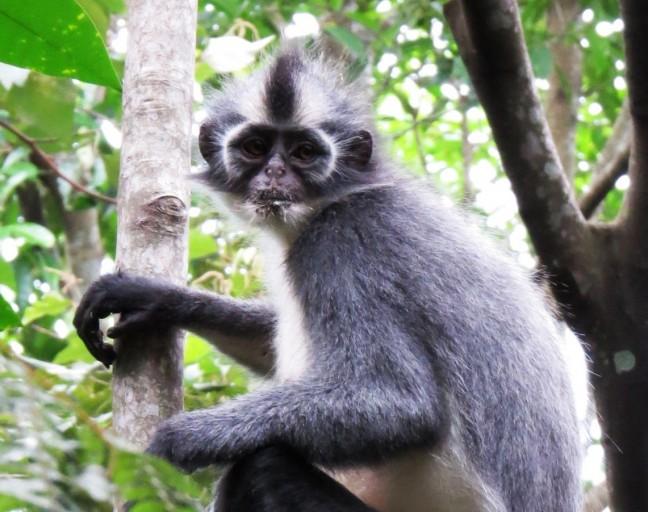 Thomas Leaf aap